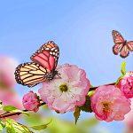 Frühling in deutscher Sprache / Jar v nemeckom jazyku
